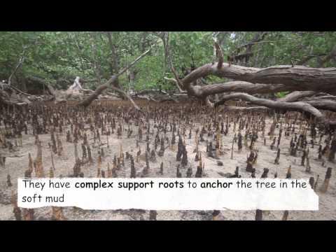Habitat 6 - Mangroves