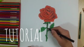 Çiçek - Gül Nasıl Çizilir? How to Draw a Realistic Rose / TUTORİAL