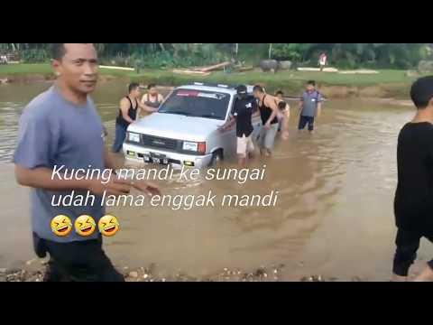 Kucing Nyebur Sungai Panther Mania Riau Kopdar PMR Dan IMC November 2018
