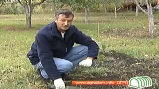 Грецкий орех.avi(Как правильно выращивать грецкие орехи. Как ухаживать за грецким орехом. Строительный портал http://donosvita.org..., 2012-03-24T11:31:42.000Z)
