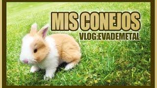 VLOG: Nacimiento de mis conejos ( EvaDeMetal )