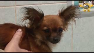 Привить собаку   защитить от бешенства