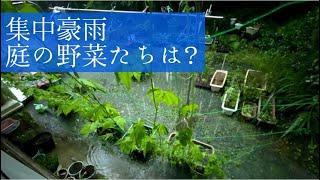 【豪雨】降り続いた雨、庭の被害は?~Heavy rain~