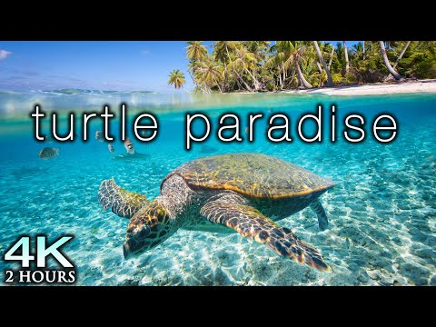 TURTLE PARADISE 4K Undersea Ambient Nature Relaxation Film + Jason Stephenson Meditation Music 🐢🥰