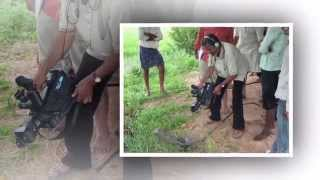 SRI Method of Paddy Cultivation documentary film field shots