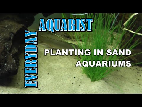 How To Plant In Sand Aquariums