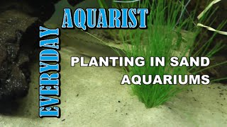 Planting In Sand Aquariums, Stop Your Plants Floating Away