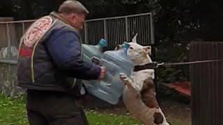 AMERICAN BULLDOG TRAINING DAY AT LOROCKMOR WORKING DOGS