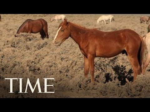 Mustang Monument: Behind The Nevada Sanctuary For Wild Mustangs | TIME