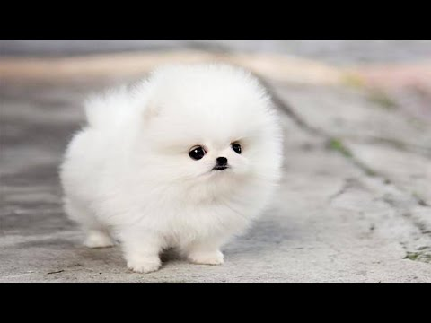 The Cutest Puppy in The World thumbnail
