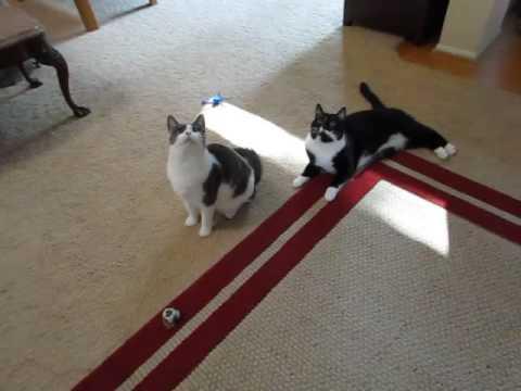 Hilbert & Hopper at Play