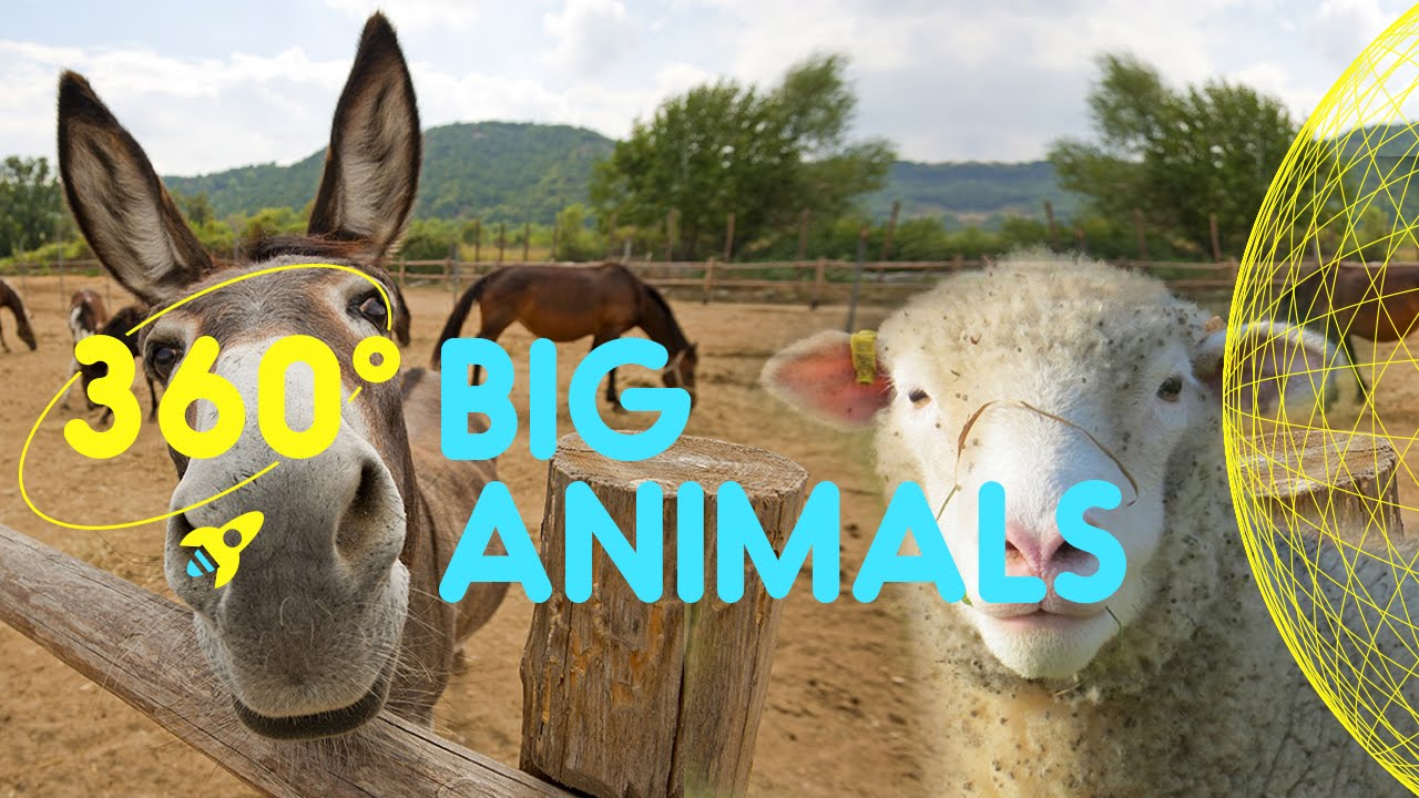 Meet the Big Animals Compilation 360 Degrees for Kids