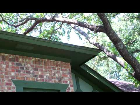 House Painting Job South Arlington, TX