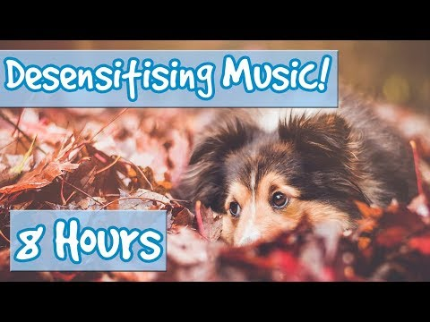DESENSITISING DOG MUSIC! Music with Sound Effects to Desensitise Dogs to Noises and Reduce Anxiety🐶