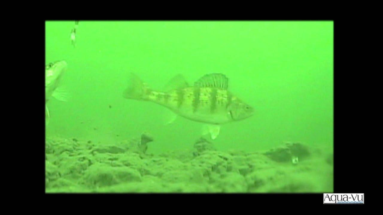 Aqua-Vu Underwater Fish Strikes - YouTube