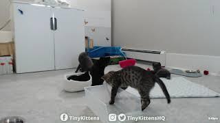 paralyzed-bunny-kitten-ferocious-hunter-tinykittens-com