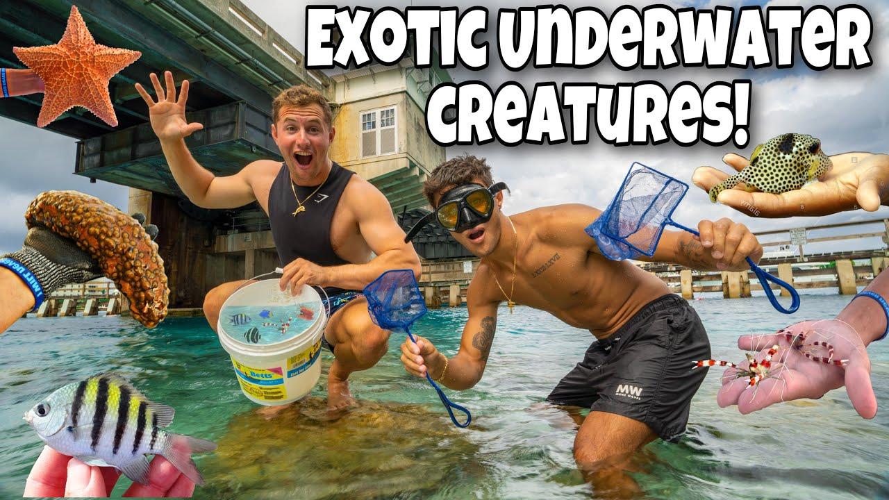Catching EXOTIC Underwater CREATURES For My AQUARIUM!! *Epic*