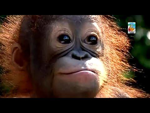 Documentary Discover Sabah Borneo Malaysia