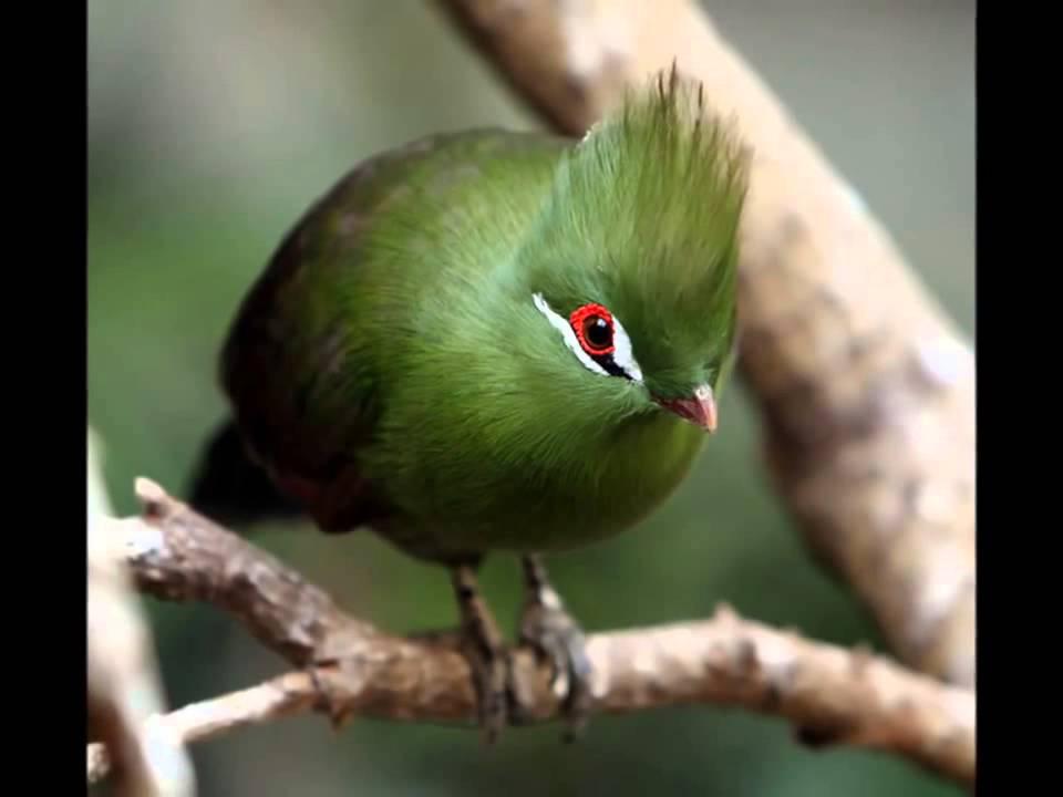 چسب پرنده باغ پرندگان رفته باشیدخواهیددید که در میان پرندگان آزاد در محوطه باغ پرنده ای زیبا به
