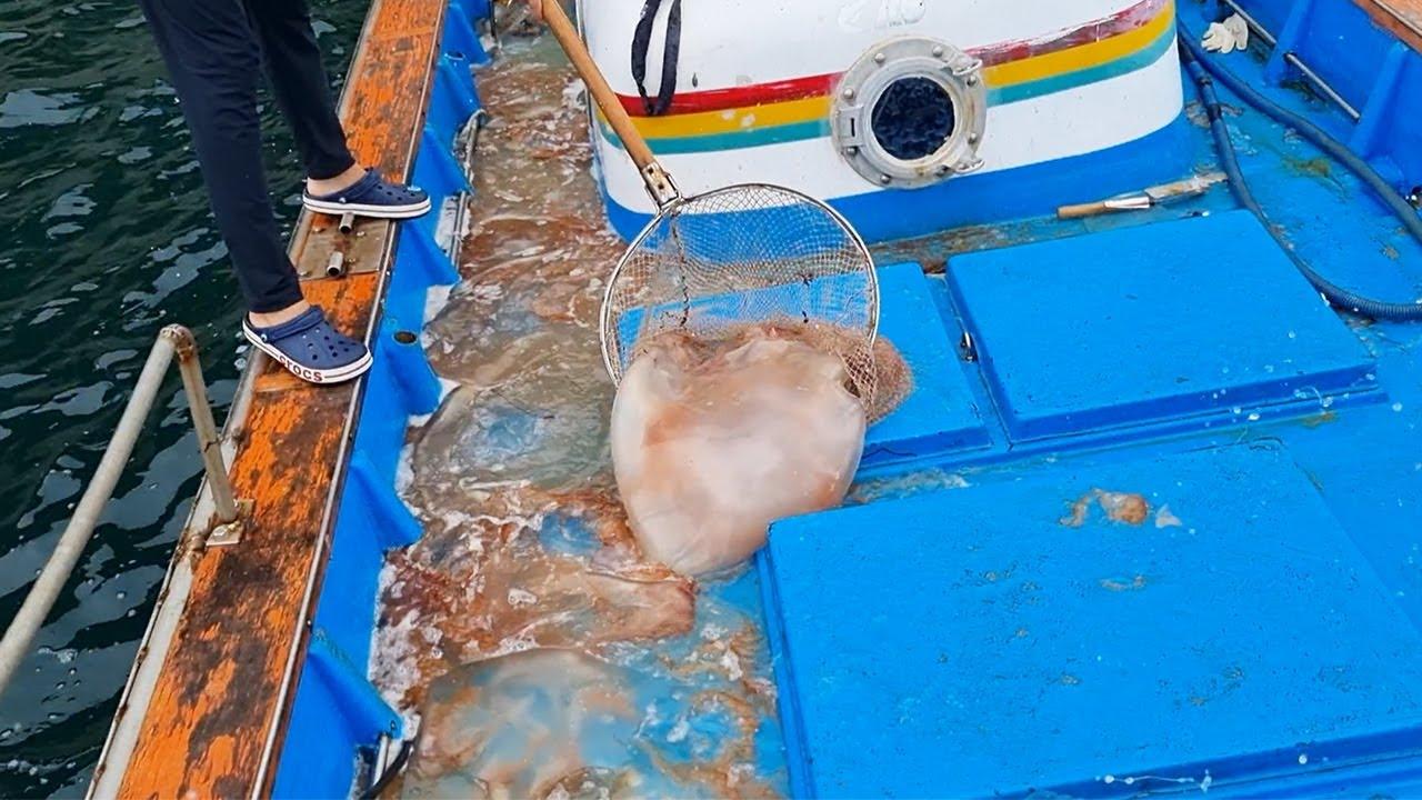 초대형 독성 해파리를 닥치는 대로 퇴치해보자!