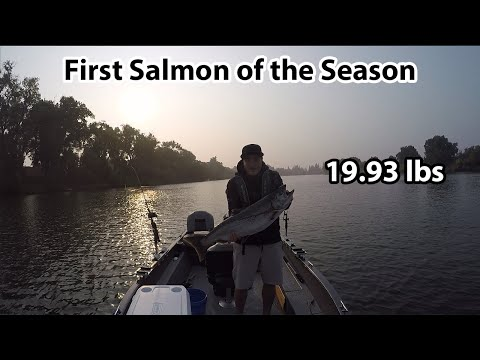 First Salmon Of 2020 -- Sacramento River Salmon Fishing
