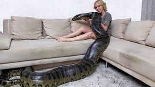 ANACONDA GIGANTE - Algumas Mulheres Com Suas Anacondas