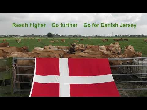 Dansk Jersey Export