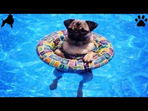 NEW SUMMER WATER DOGS- PUPPY BEACH POOL SWIM FUN - DIY Dog Fun by Cooking For Dogs