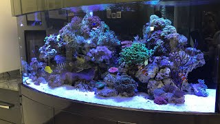 We sat down with another satisfied customer, check out that reef tank!