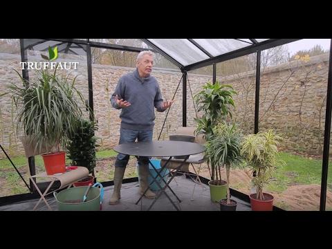 culture et entretien du dracaena jardinerie truffaut tv youtube. Black Bedroom Furniture Sets. Home Design Ideas