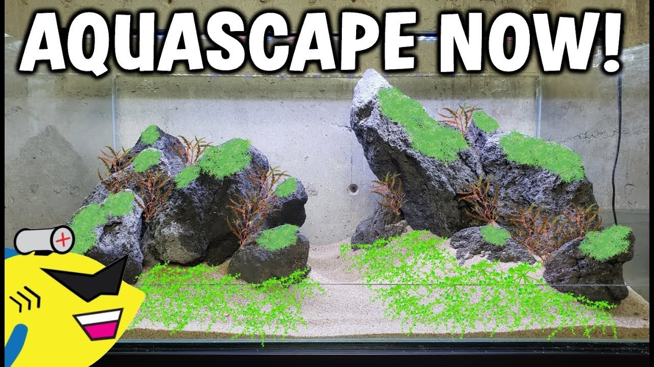 LET'S AQUASCAPE! - Aquascaping Help / Tips / Ideas And ...