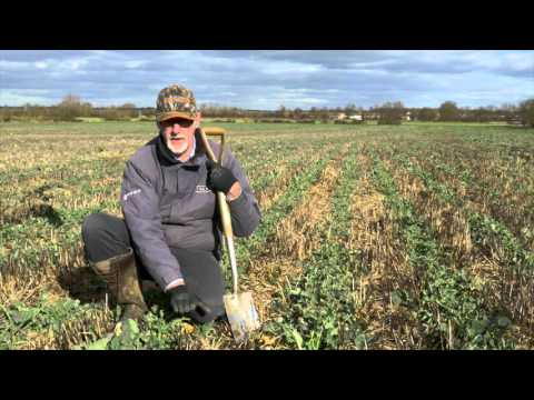 04 Examination of Winter OSR sown by shallow Micro wing technique