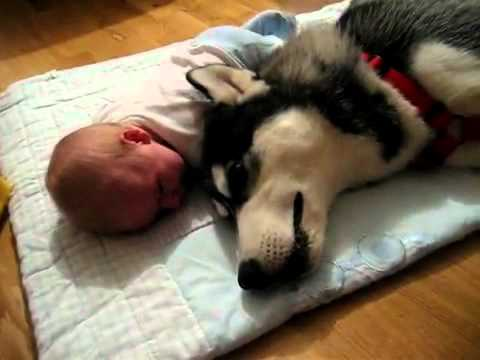 Hq Cute Baby Wallpapers Youtube Siberian Husky And Baby Crying Together Flv