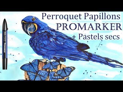 Perroquet Et Papillons Aux Promarker