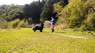 2018年 春 桜山犬舎 男十郎&ボンズパパ.