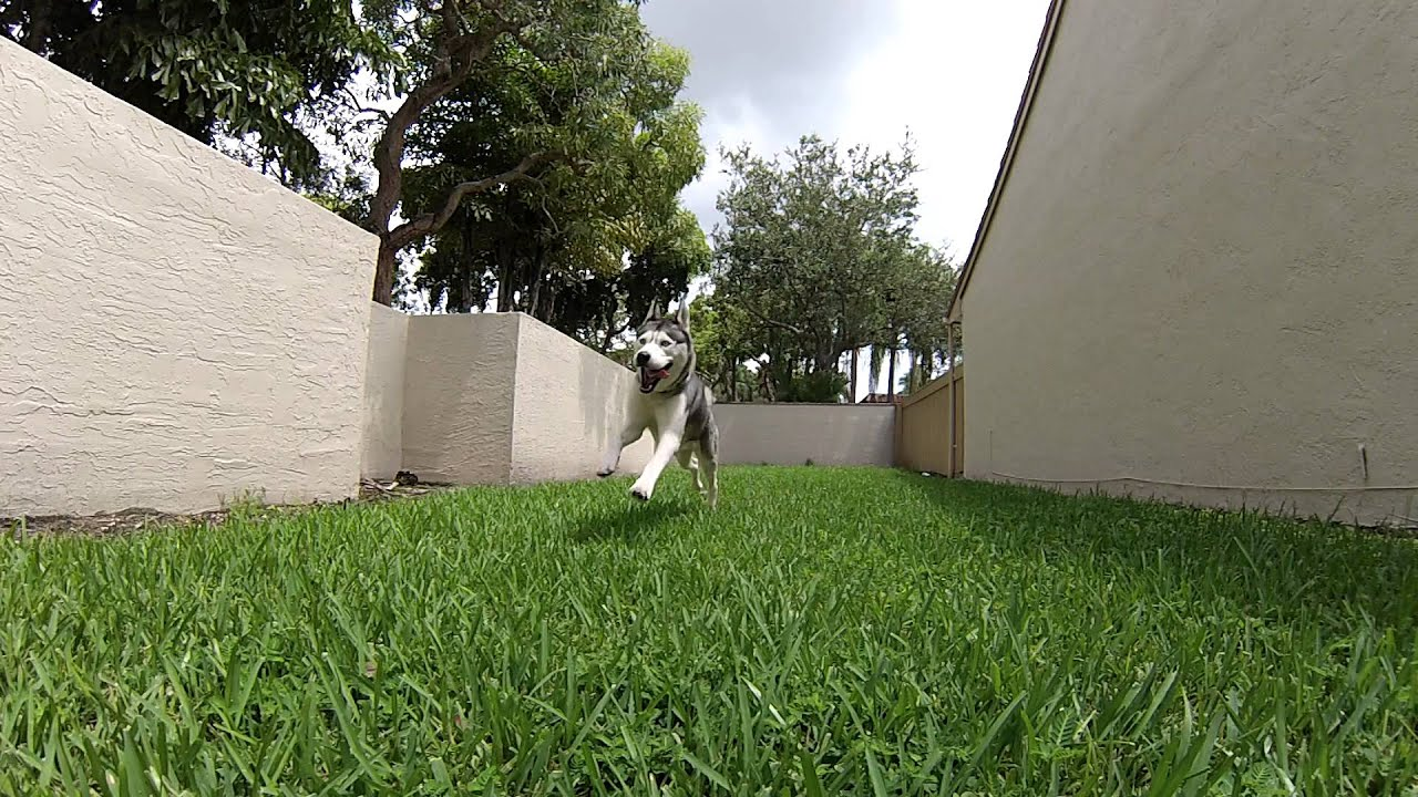Husky Things in Slow Motion!