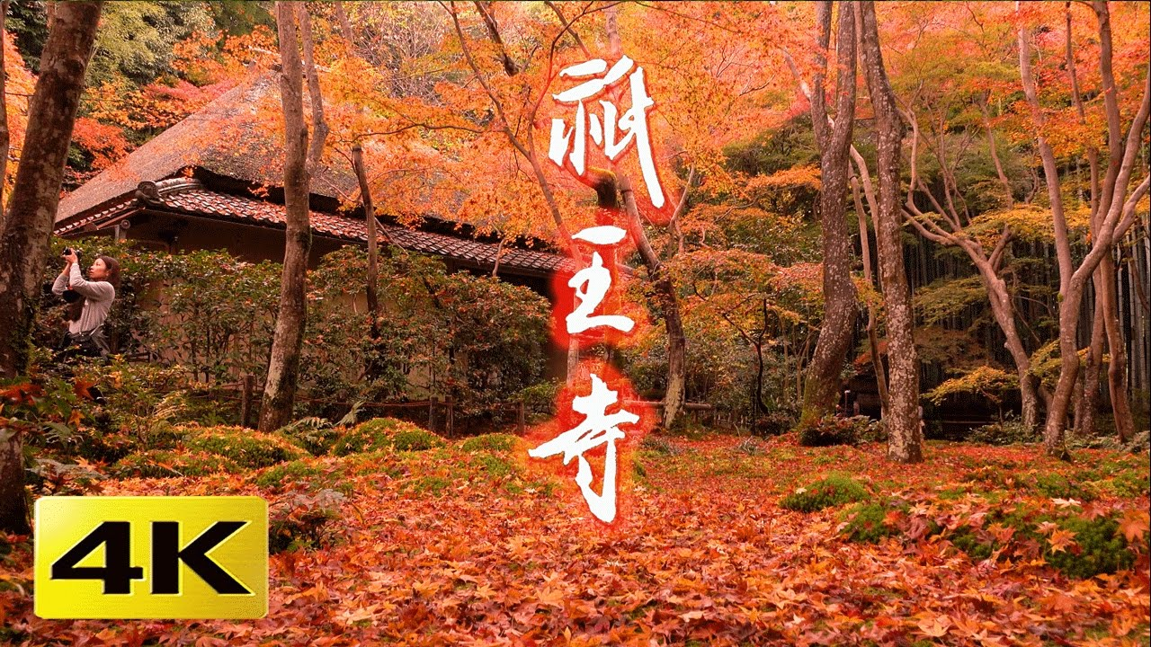 4K] 祇王寺 京都の紅葉 京都の庭園 Gio-ji Temple Autumn leaves [4K ...