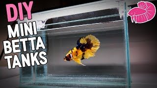 DIY Betta Fish Tank - I Made These! Video