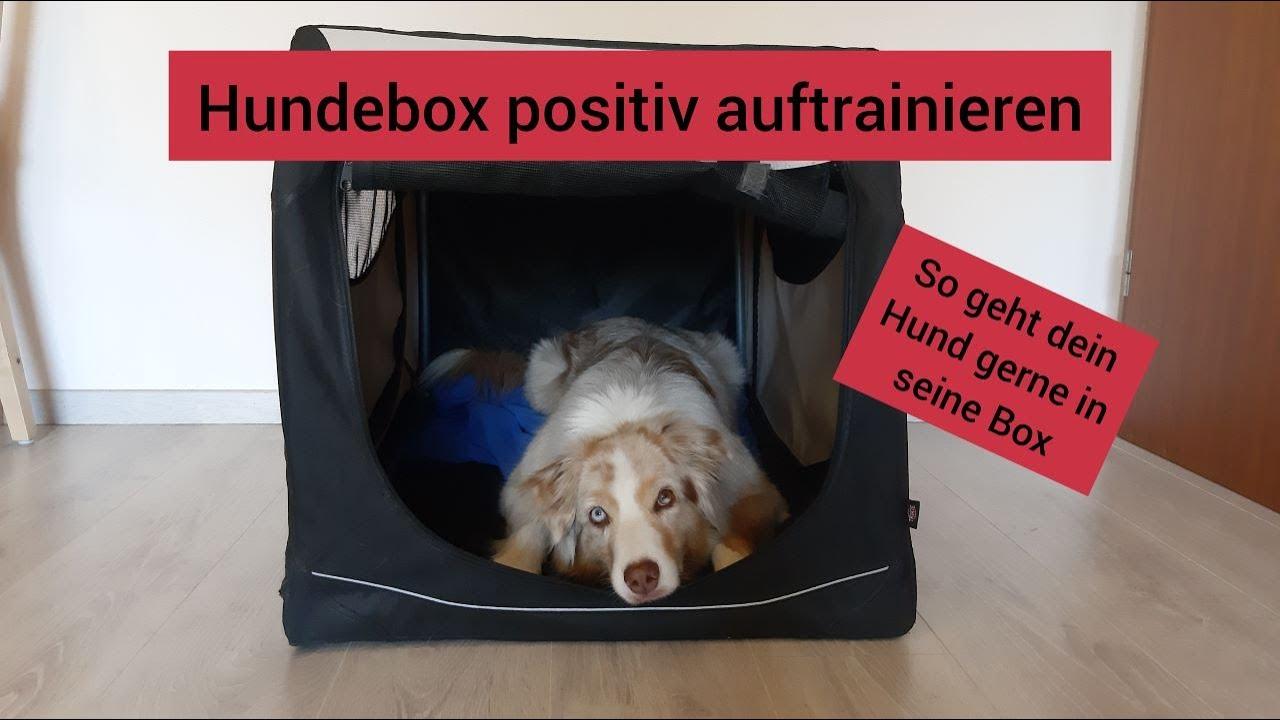 19+ Hundetraining Hundebox positiv trainieren   So geht dein Hund gerne in  seine Box Image