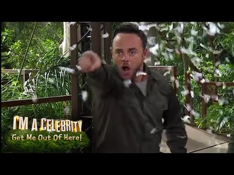 Ant Loses It With Dec Whilst LIVE | I'm a Celebrity...Get Me out of Here!