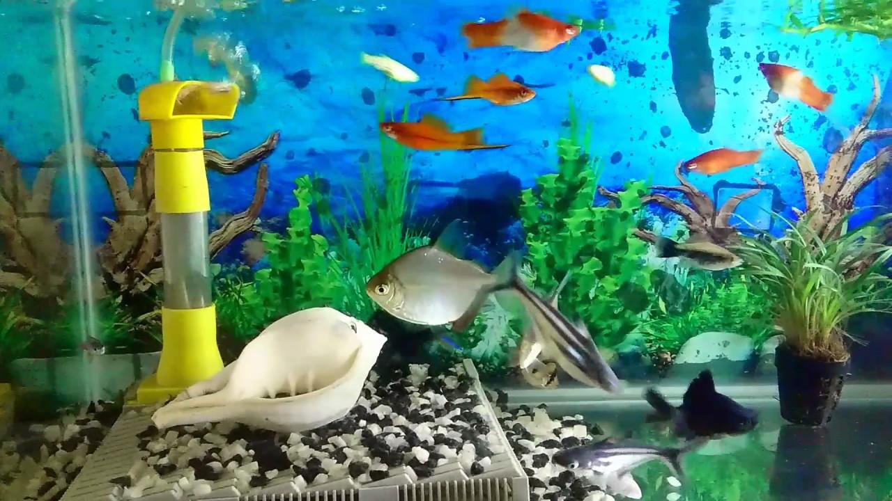 Fish aquarium in sri lanka - Aquarium Sri Lanka