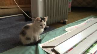 Котята, 2,5 месяца