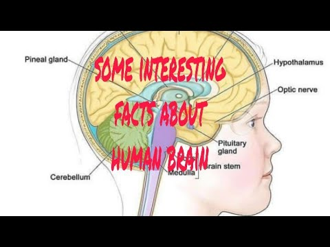 Some interesting facts about human brain