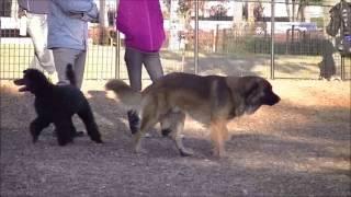 都立篠崎公園ドッグランにて、 謎の大型犬あらわる!! なんかの雑種か...