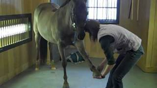 Equine Massage Therapy With Jess