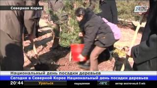 Сегодня в Северной Корее Национальный день посадки деревьев