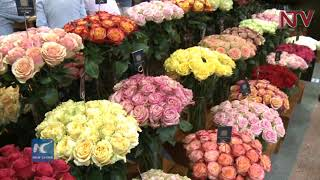 Hope fades for Kenyan farmers eyeing the US flower market