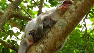 WOW Very Worry Jane ! Wait jane's newborn on tree high !What happened to jane's baby newborn..?