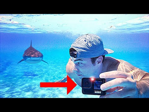Why do Sharks Attack GoPros?