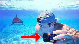 Shark vs. GoPro